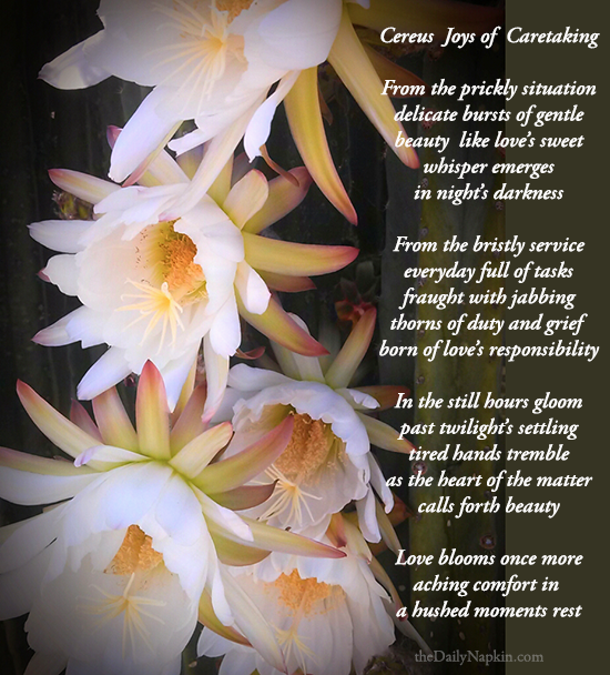 Cereus Joys of Caretaking